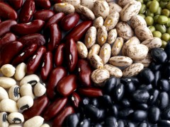 Beans – Pinto, Black, Kidney – How to Process and at what cost!