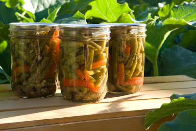 Canning Dilled Green Beans