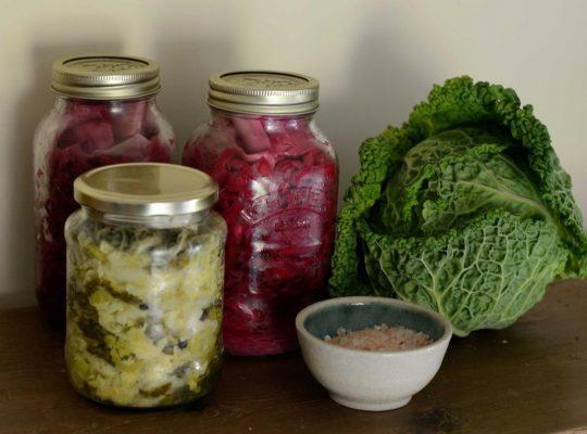 Making Sauerkraut in Half Gallon jars –