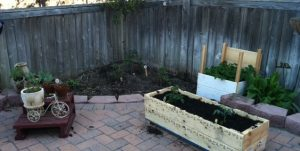 Cherry tomatoes, Potato Box, Sorrell, Zucchini, Herbs