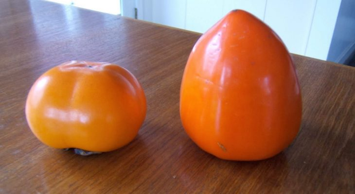 Fuyu Persimmon on the left and Hayachi on the right!