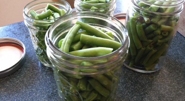 Green Beans cut to one inch lengths. Brine not added yet.
