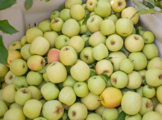Canning Applesauce Will Let You Enjoy Your Apples Year Round